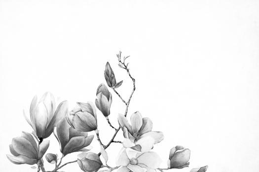 BW flower drawn